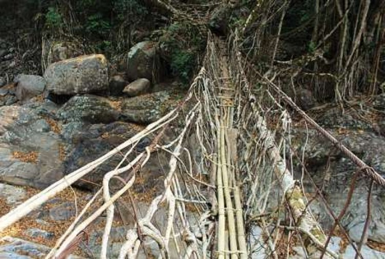 Unknown and interesting facts :All About Living Root Bridge : India