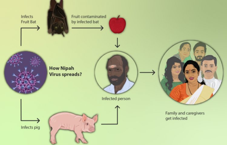 Effective Ways To Overcome Nipha Virus's Problem Interesting Facts and FAQs Treatment, Prevention of Nipah Virus